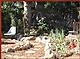 backyard Ojai garden