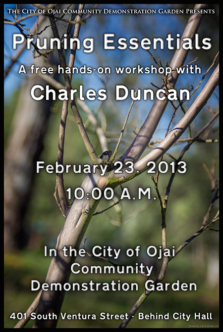 PruningWorkshop2013WinterSmall.jpg
