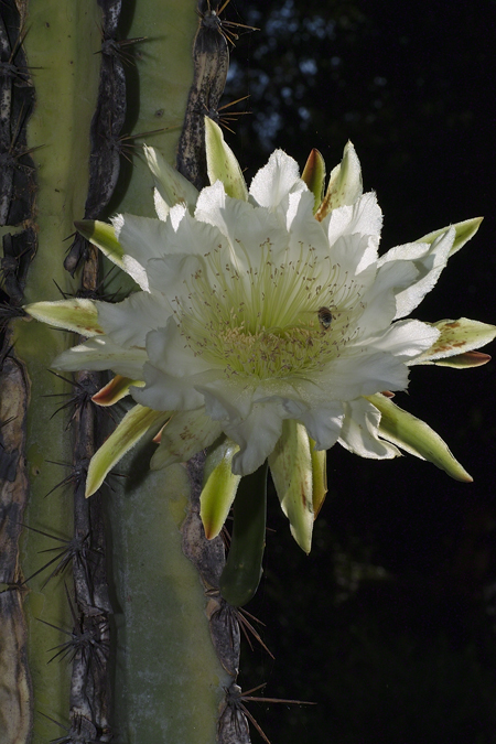 cactus-flower08-web1.jpg