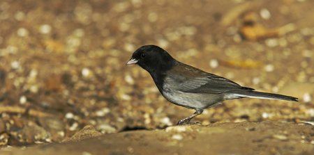 dec-bird4-web.jpg