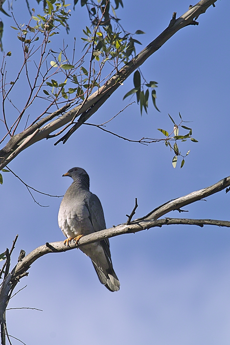 december-dove-web.jpg