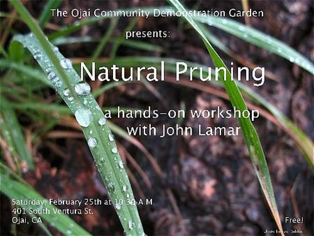 Ojai natural pruning workshop
